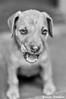 (Yuricka Takahashi) Tags: dog branco minas gerais pb mg e cachorro takahashi petro horizonte bh belo yuricka