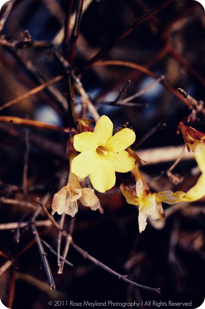 Flower Spring 1.2 bis