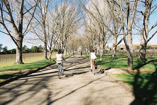 wine and bikes