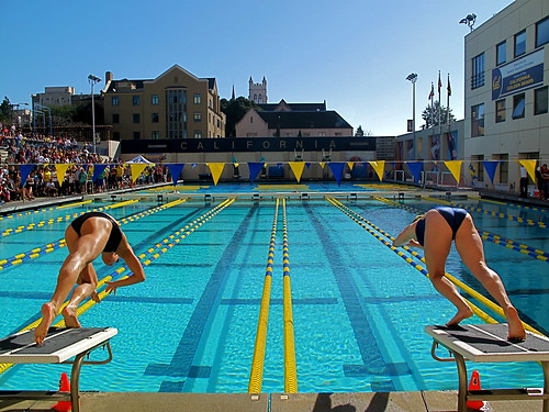 Cal Swimming and Diving