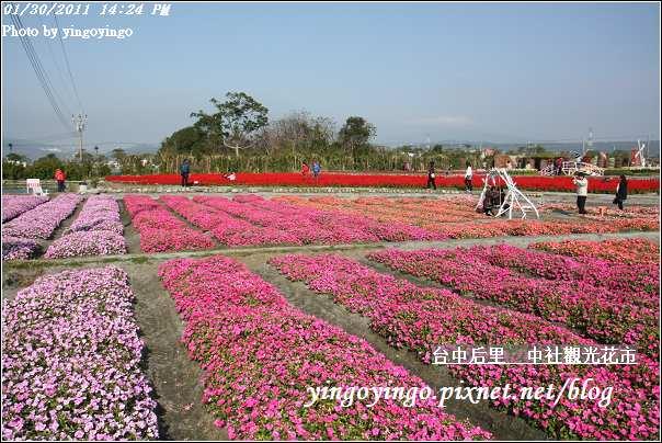 台中后里_中社光觀花市20110130_I6204