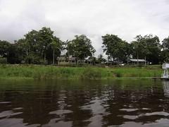 Paisagem ribeirinha amaznica - rio Amazonas - Amazonia, Brasil (Wilmar Santin) Tags: brazil brasil am amazon brasilien paisagem brasile amazonas brsil amazonia amazone amazzonia ribeirinha amazonien riodelleamazzoni paisagemamaznica paisagemribeirinha paisagemamazonica paisagemribeirinhaamaznica