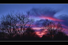 just after sunset (Wim Koopman) Tags: trees sunset holland netherlands dutch night clouds photography photo colorful dune den stock nederland hague haag wassenaar stockphoto kleurrijk duin haagse stockphotography meijendel waterleidingduinen wpk