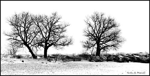 Trees at Port Darlington BW