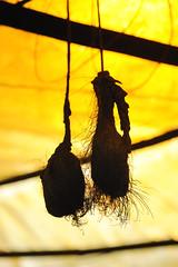 Testicles (Arddu) Tags: pig myanmar testicles chinesemedicine scrotum genitalia