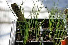 seedlings 031