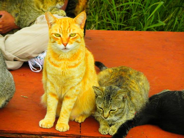 Lanai Cats