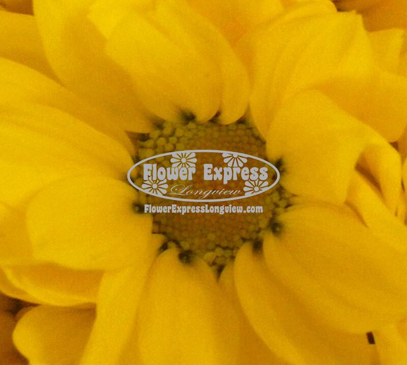 Yellow Daisy Mum