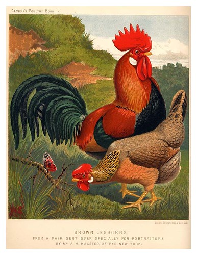 015-The illustrated book of poultry. With practical scheduals…1890-Lewis Wright