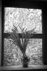 Grainy grain (Mark J P) Tags: uk greatbritain england blackandwhite bw english window glass monochrome mono blackwhite britishisles unitedkingdom bokeh britain grain monochromatic fave cobweb dirt gb british desaturated grainy dust cobwebs windowledge tyneham diamondclassphotographer flickrdiamond