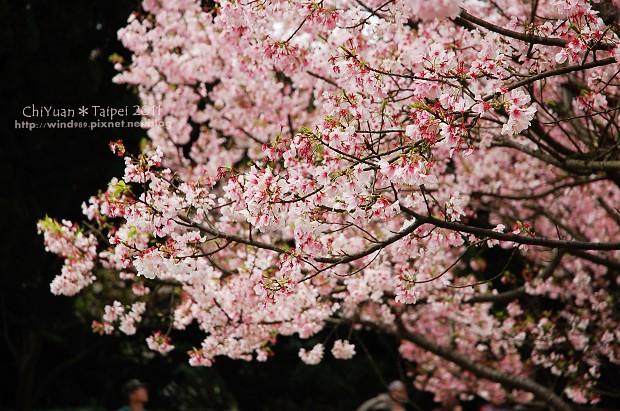 2011陽明山花季14.jpg
