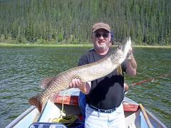 Yukon Northern Pike