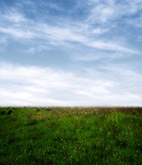 Premade BG 53 (~Brenda-Starr~) Tags: flowers sky nature field grass clouds background stock creativecommons resource cclicense premade brendastarr freeforuse backgroundsonly thestockyard