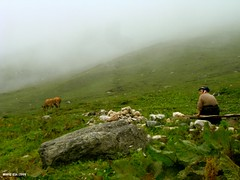 Yaylac (katreivita) Tags: old woman animal fog turkey cow village agriculture pastoral blacksea rize