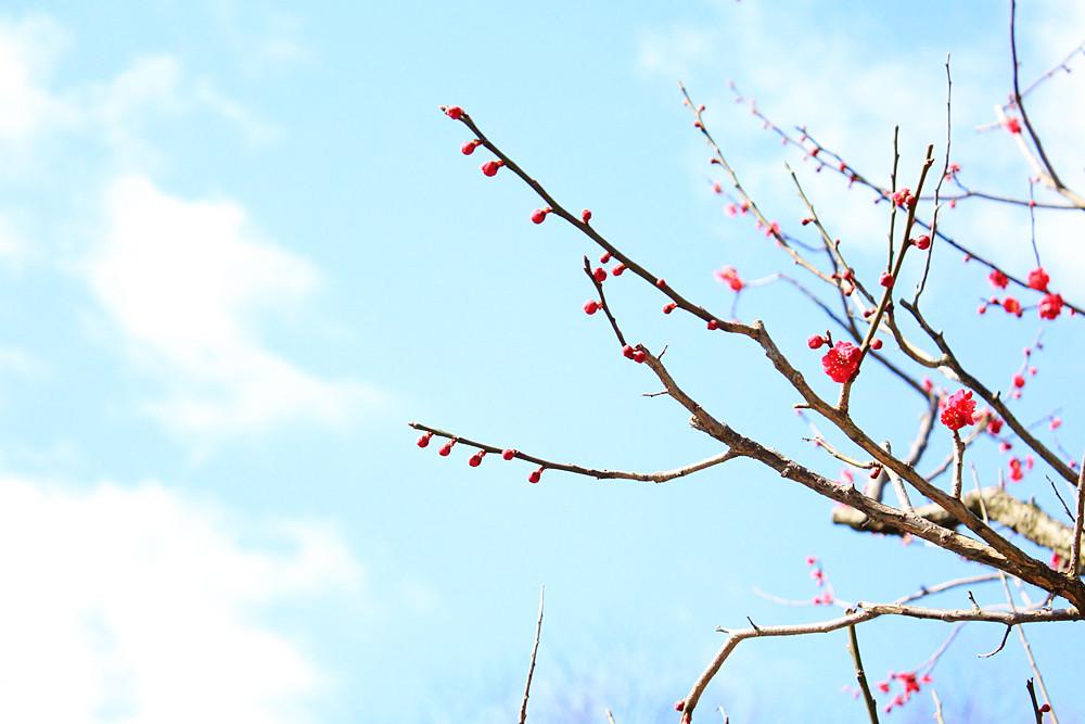 春が着たぞー!