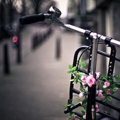 amsterdam (pamela ross) Tags: street flower holland netherlands amsterdam bike bicycle rose pen 50mm minolta bell bokeh f14 olympus ep1