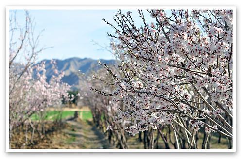 Happy Spring ...
