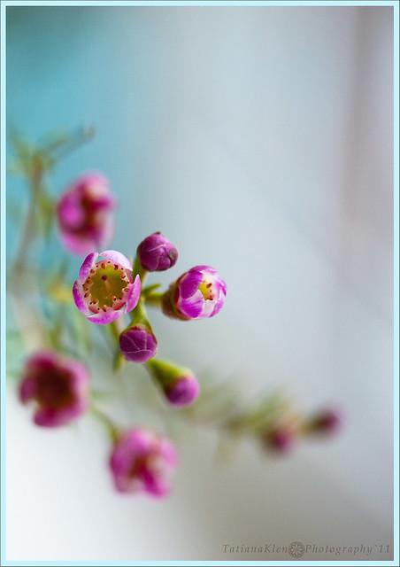 весна на окошке