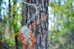 (tyreke.white) Tags: blue sun white tree water 50mm spring hands nikon bokeh bark flare jar 18 vignette d5000