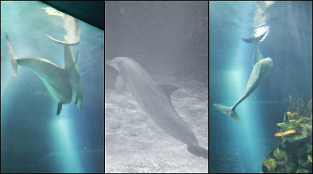 Epcot Living Seas dolphin triptych