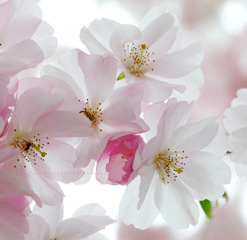 Un fiore chiama l'altro by Laura [*Les Hirondelles* Photography]