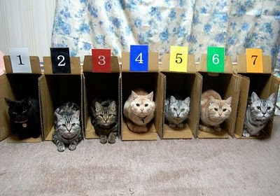 organize_your_cats_10