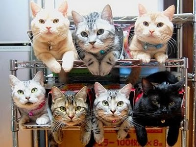 organize_your_cats_01