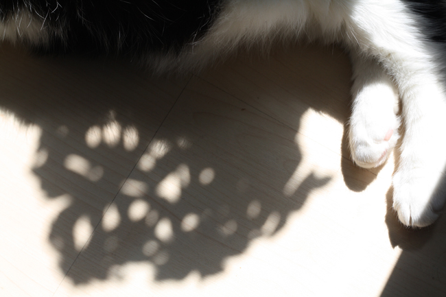 kitty shadow