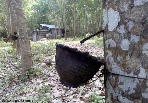 Каучуковые плантации, провинция Краби