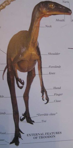 Eyewitness Visual Dictionary of Dinosaurs, Dale Russel's infamous Troodon model