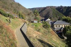 栃谷尾根の茶畑
