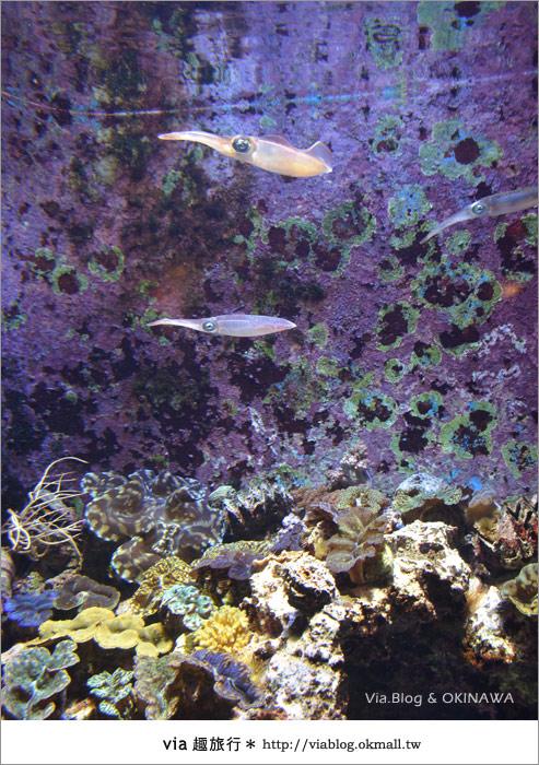 【沖繩景點】美麗海水族館~帶你欣賞美麗又浪漫的海底世界!17