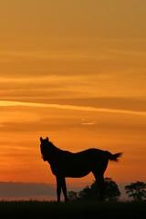 Sky on Fire (Blue-Eyed Kentucky) Tags: horses sunsets blueeyedkentucky bluegrass sky lexingtonkentucky