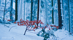 untitled (Zavarykin Sergey) Tags: winter snow forest germany landscape deutschland professional welzheim