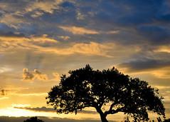 Sunrise (Stromboozle) Tags: africa silhouette clouds sunrise uganda missiontrip 2010 d90 silohete kapelebyong