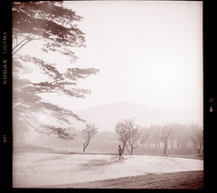 Under the big tree, (khai_nomore) Tags: bw 120 film mediumformat golf hc110 scanned kodaktmax400 yellowfilter rm 2400dpi 6minutes 5minutes ilfordrapidfix canonscan8400f autaut ricohflexvii tmy2400 ricohanistigmat75mmf35 dilutionb17