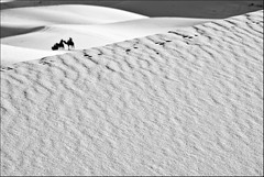 (jur025) Tags: desert arena morocco maroc desierto marruecos camels ergchebbi camellos