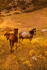 / Horse (king David Israel) Tags: horse color nature field canon landscape caballo 7d galope
