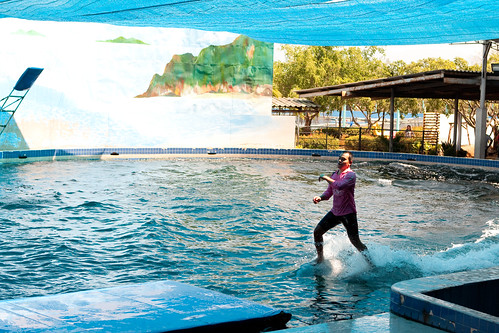 Dolphin Ski!