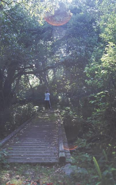 森と人のフリー写真素材