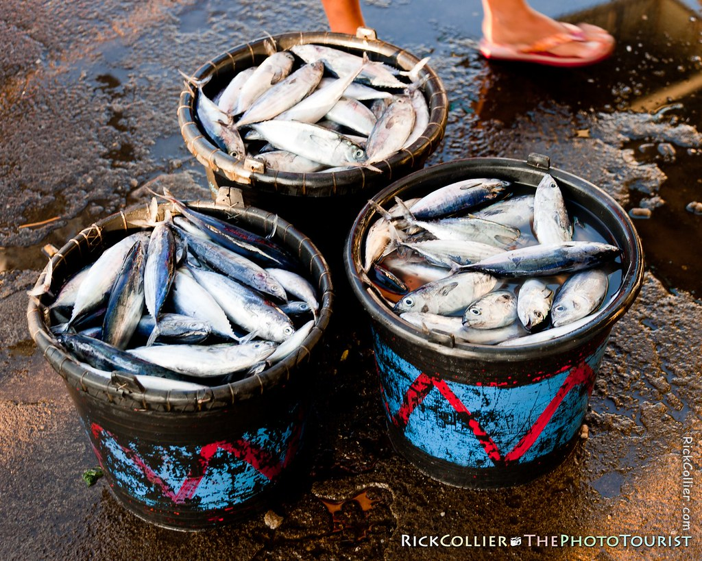 Buckets of fresh fish for sale at the fish market in Bitung, Indonesia