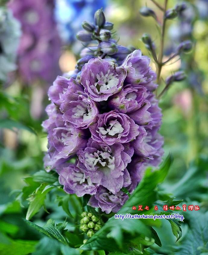 44 不知名花