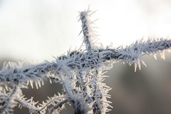"gelidi...ricami ("" paolo ammannati "") Tags: snow macro ice me photographer top natura io neve inverno montagna verna bosco casentino ghiaccio laverna chiusidellaverna galaverna paoloammannati complimenti effettinaturali mygearandme fotoconneve panoramaconneve"
