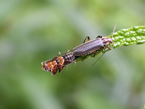 【昆蟲的性愛情色】2003.06.14 攝於大同