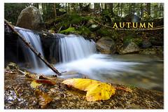 Pre-Season (Transcontinenta) Tags: autumn fall water leaves river nikon newhampshire nh foliage franconianotch 18mm carlzeiss mountlafayette d700 zf2 raymondlarose carlzeiss18mm distagont1835