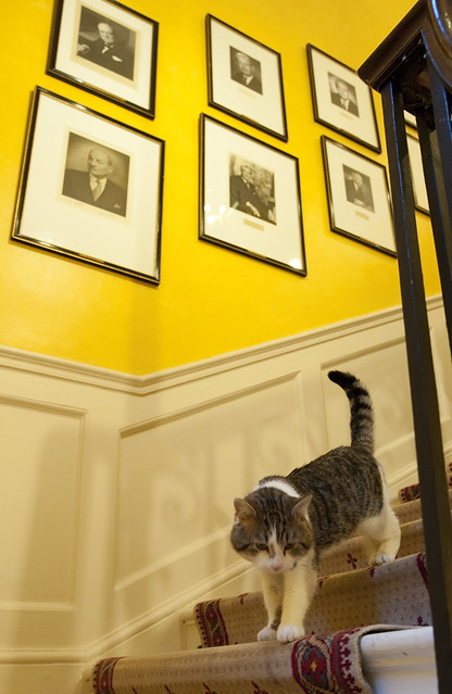 Larry on the stairs at 10 Downing Street