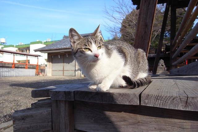 Today's Cat@2011-02-19