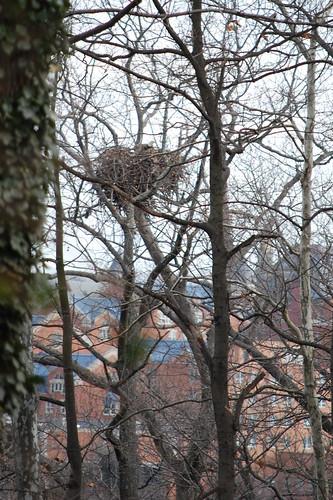 A (very surprising) backyard bird