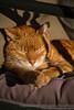 20110219-Asleep in the sun 4