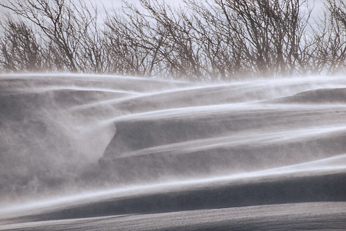 blowing snow on Route 4, with hedgerow
